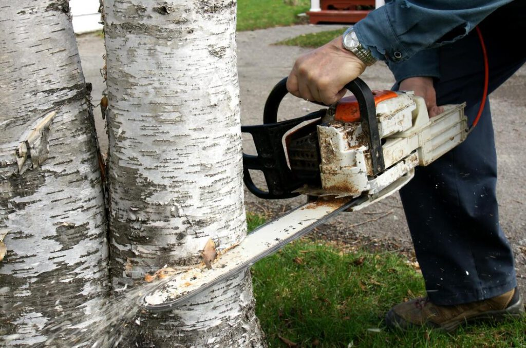 colleyville-tree-service-company-services_orig